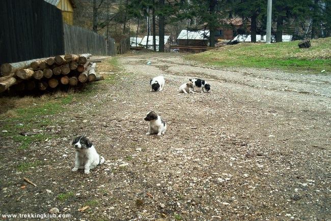 Puppies - Lapos Gorges