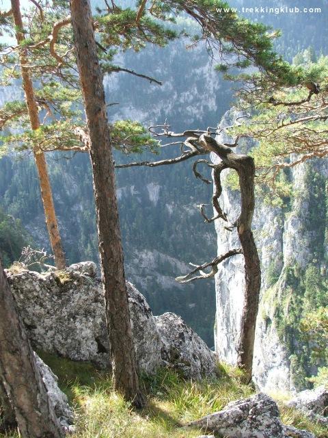 Surducului Stone - Bicaz Gorges