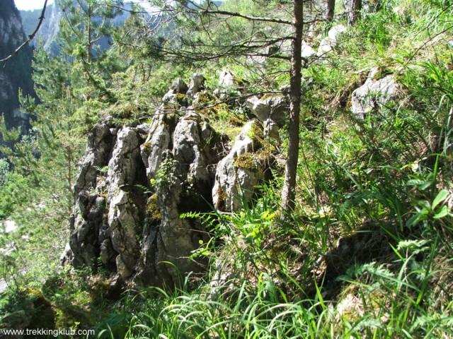 Surducului Stone - Surducului Stone