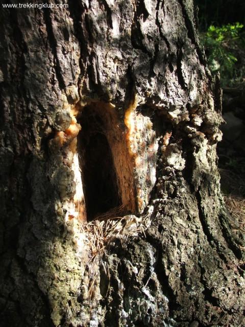Window in the tree - Surducului Stone