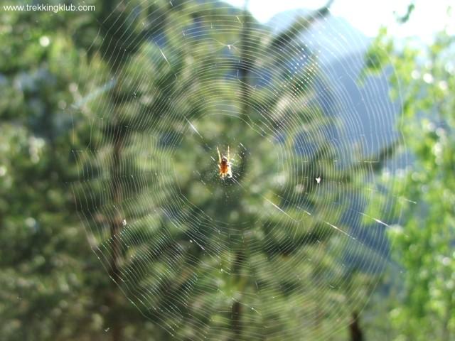 Pókháló - Szurdok-kő