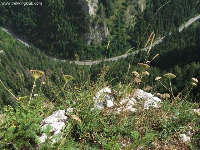The road under Fagetul Ciucului - Fairy Garden
