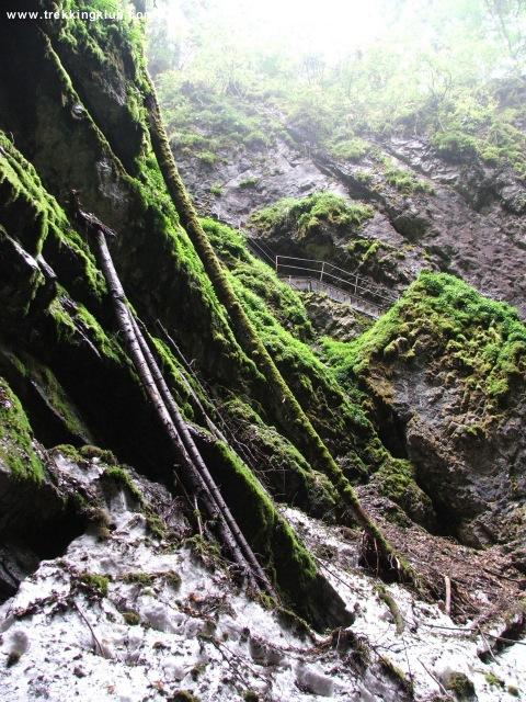 Scarisoara cave - Scarisoara cave