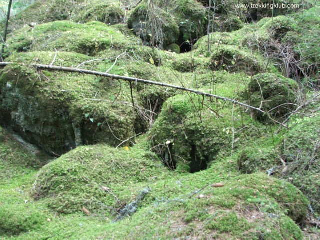 Moss - Runcului Stone