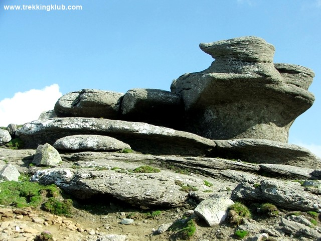 7459 - Cat Sphinx