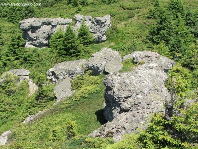 Rock mushroom group - Tamau