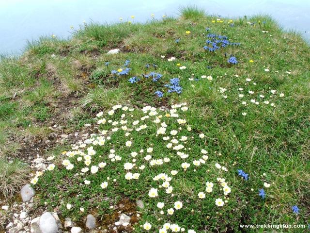 Virágok a Zaganu-csúcson - Gropsoarele-Zaganu