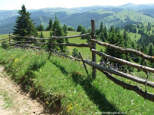 4982 - Beautiful Mountain