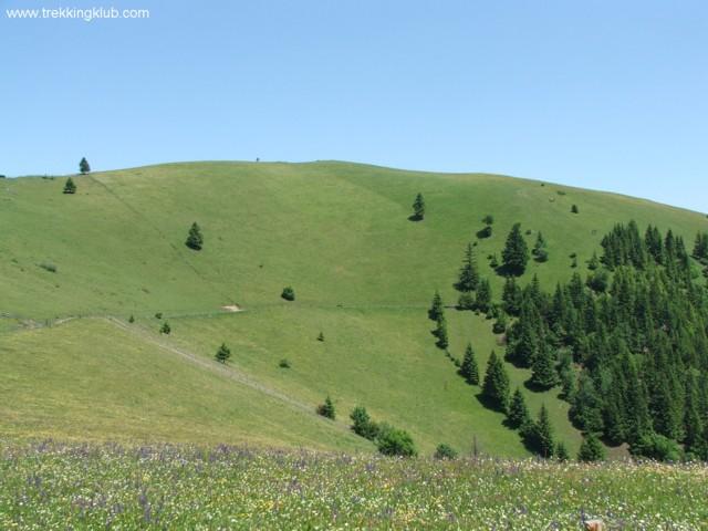 Muntele Frumos - Muntele Frumos