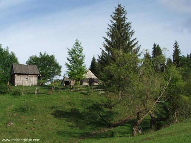 Salase de vara - Jávárdi