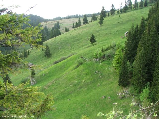 Pasune alpina - Jávárdi