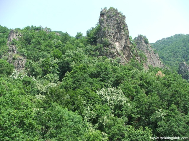 Rosiei Stones - Cozia peak