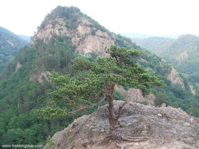 Lookout point - Cozia peak
