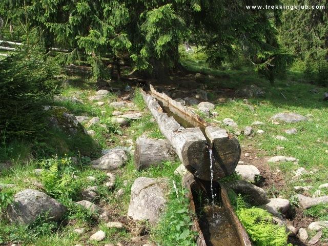 A görgényi kőgombák előtti forrás - Görgényi kőgombák