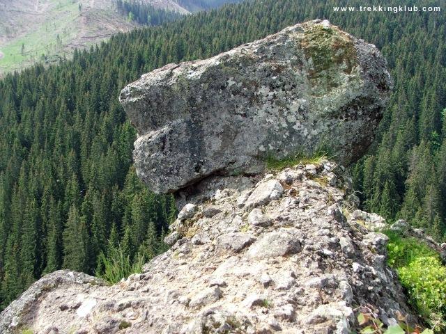 A kisebb görgényi kőgomba közelről - Görgényi kőgombák