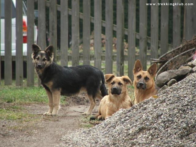 Zsögödfürdő üdülőfalujának magán nyaralóházai között kutyákkal is találkozhatunk. - Harom vára