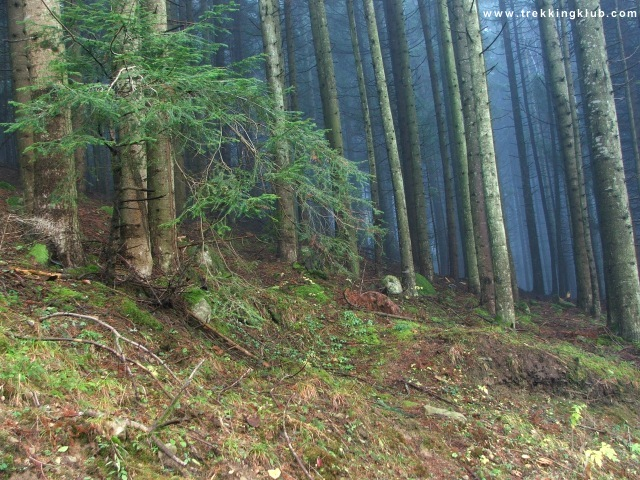 A Zsögödfürdő melletti erdőben, egy októberi ködös nap. - Harom vára
