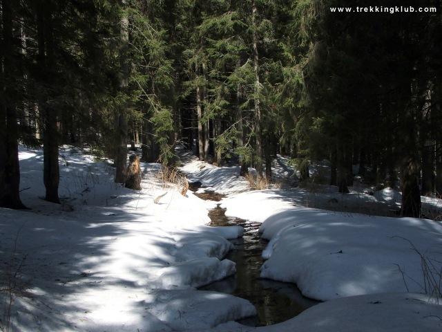Creek - Harghita Racu