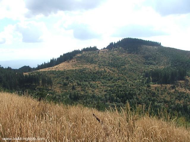 Muntele Cucu - Muntele Cucu
