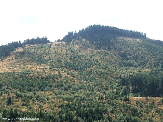 Fenyőkkel borított csúcs - Kakukk-hegy