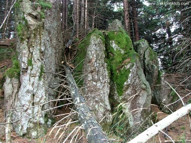 Stancarie - Muntele Cucu