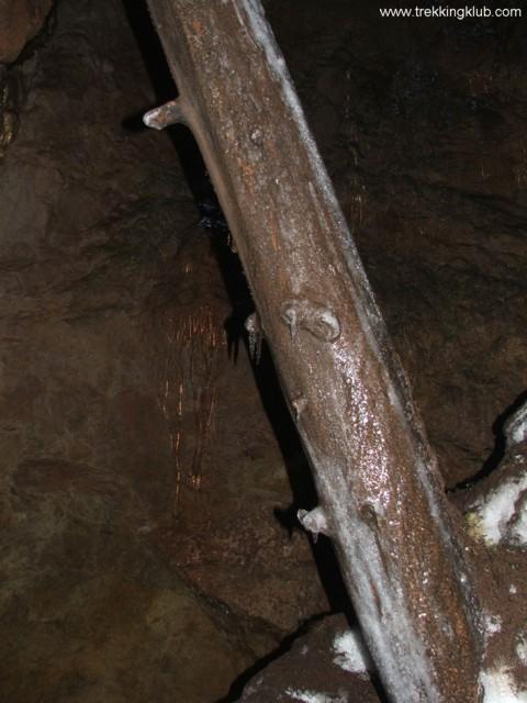 Fenyőfatörzs - Likas-zsomboly