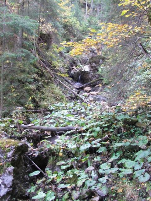 Lázár-patak növényzettel benőtt völgye - Lázár-patak
