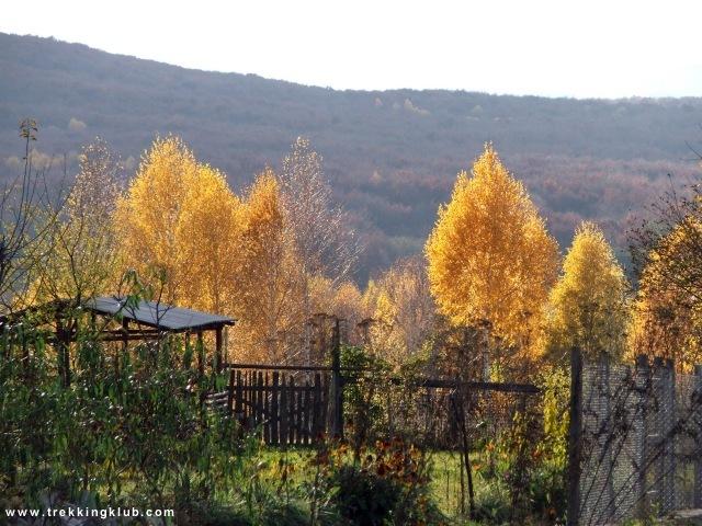 Gradinile din cartierul de vile, sud de Cluj - Concretiuni sferoidale